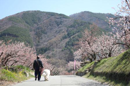 杏と犬.jpg