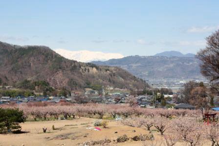 杏の花と山々